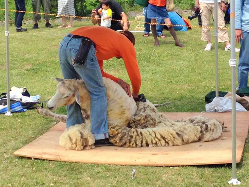 羊の毛刈り